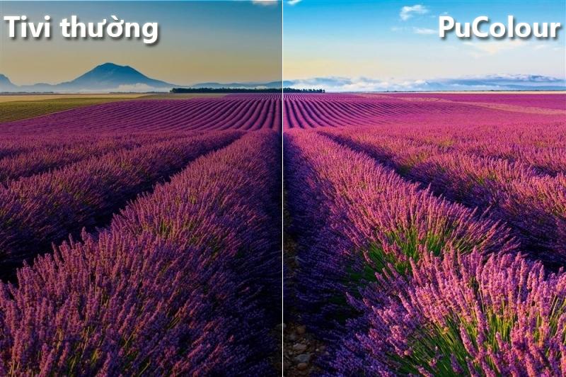 công nghệ Pucolour Smart Tivi Samsung 4K 58 inch UA58NU7103